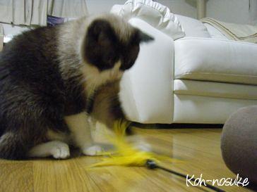 幸之助くん、おもちゃと遊びます。