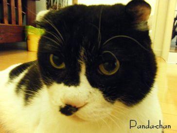 パンダちゃん1