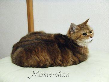 モモちゃん1