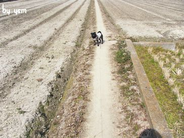 田んぼの畦道とプー
