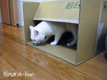 ネコのコタロウくん3