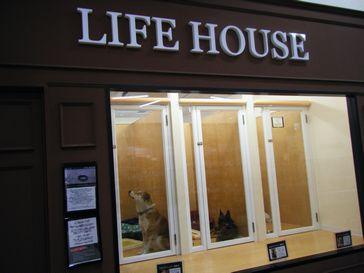 pecosお台場店-lifehouse-