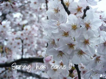 東京都文京区・桜