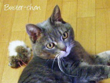 東京ペットシッターSOS文京店-猫のバスターちゃん-1