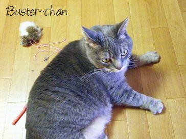 東京ペットシッターSOS文京店-猫のバスターちゃん2-