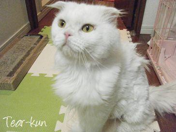 東京豊島区ペットシッターSOS-ティアくん-