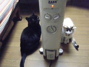 東京荒川区ペットシッター、キャットシッター