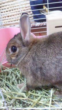 ペットシッター荒川区 ウサギ