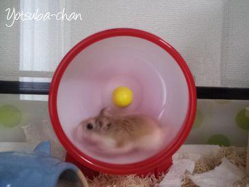 ペットシッター-ハムスター,小動物-
