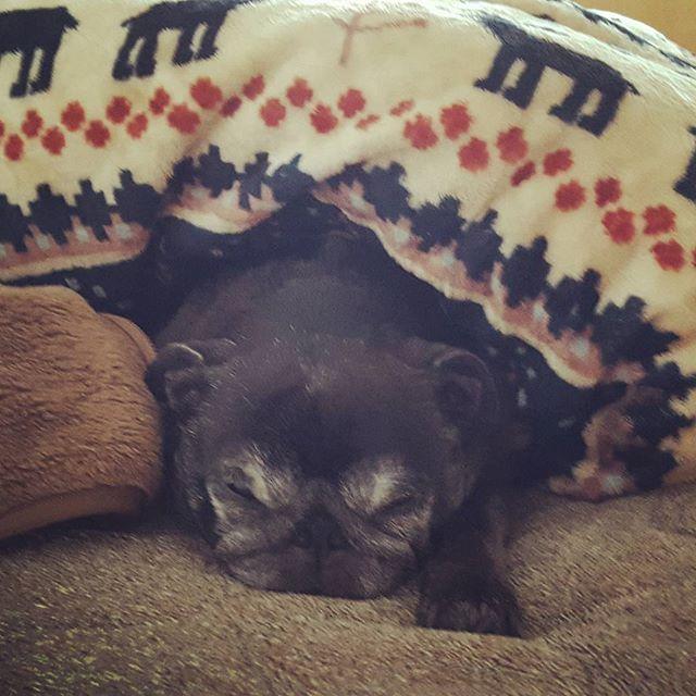 いつ起きてるの?? #Tokyoペットシッター#ペットシッター#dog#いぬ #パグ#黒パグ#pug#blackpug #pugsofinstagram