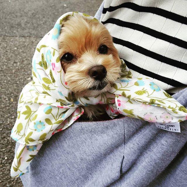 私の可愛い甥っ子、バスに乗る。(注)お花を摘みに行くのではありません。#Tokyoペットシッター#ペットシッター#dog#いぬ #まるぷー #甥っ子
