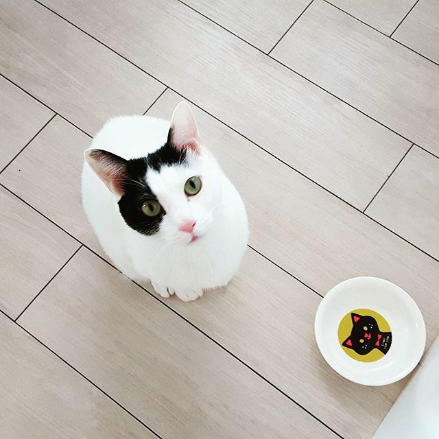 「ココにごはんを入れてください」「ポカリちゃん、ごはんはさっき食べましたよ」#Tokyoペットシッター#ペットシッター#cat#ねこ#おなかすいた