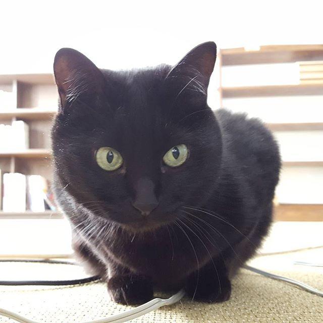 ナラちゃんが若々しく撮れました。#Tokyoペットシッター#ペットシッター#cat#ねこ#くろねこ#blackcat