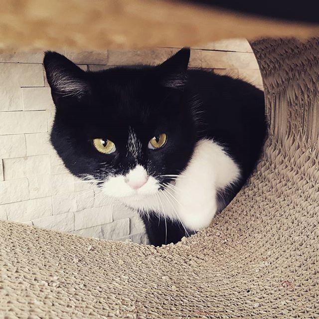 あんこちゃんの、何とも言えないこの表情が大好き私の前ではいつもこの顔(笑)#Tokyoペットシッター#ペットシッター#cat#ねこ