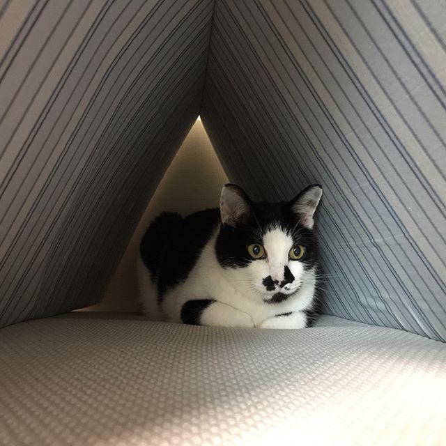 さしみちゃんの相棒のきいちちゃん️甘えて満足したら何故かいつもこの場所でマッタリ🤣#Tokyoペットシッター#ペットシッター#tokyopetsitter #cats #ねこ