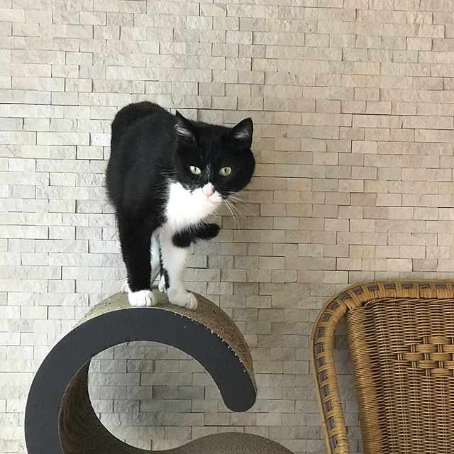 あんこちゃん、、いつもこの表情!笑#Tokyoペットシッター #ペットシッター#cat#ねこ