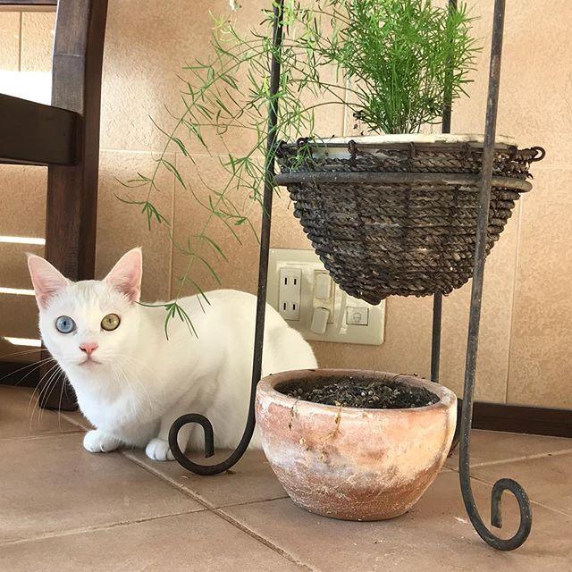 ポカポカ陽気の朝。ステラちゃんも上機嫌#Tokyoペットシッター #ペットシッター#ねこ#cat