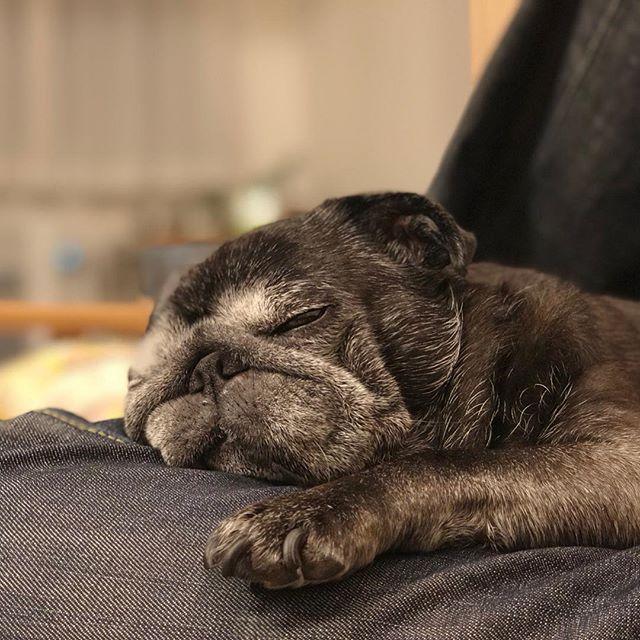 なんでこんなに可愛いかな〜。#Tokyoペットシッター #ペットシッター#pug#blackpug #パグ#黒パグ#dogs