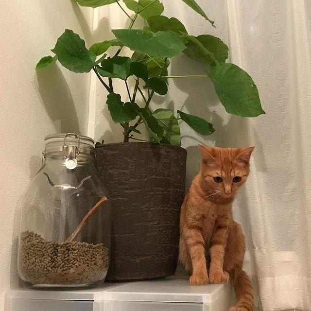 背ぇ比べ。#tokyopetsitter #petsitter #cat #catstagram #ねこ #ねこすたぐらむ