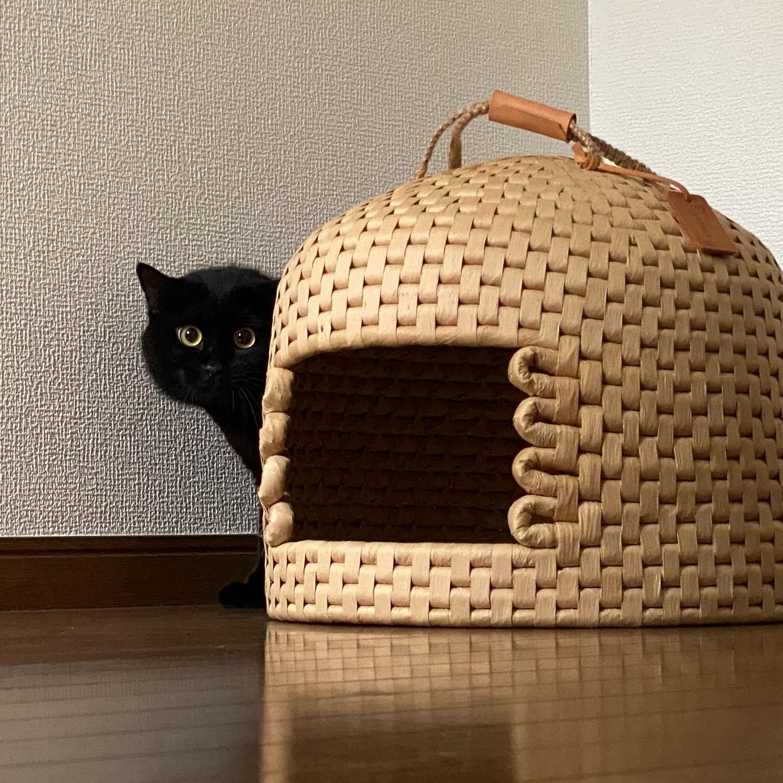 初めましての「ふみおちゃん」インスタではずっとお見かけしていて、会いたいな〜と思っていたんですけど、すっごく怖がりさんで隠れんぼでした久し振りのたまきちゃんは、「ごはんの人だわ〜!」と歓迎してくれ、バクバクとごはんを食べて通常運転たまきちゃん、18歳!食欲モリモリです#tokyopetsitter #petsitter #cat #猫